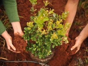 3,2 миллиона деревьев посадят в нижегородских лесах этой осенью