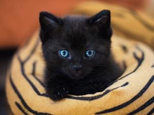 Откуда взялось поверье, что у кошки девять жизней