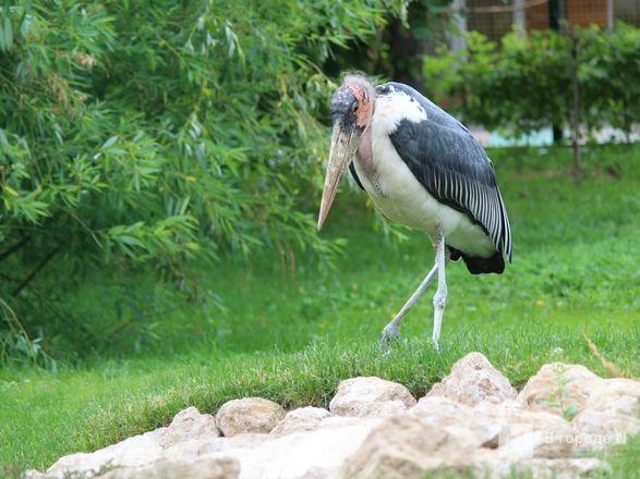 Уникальный вольер для марабу построили в нижегородском зоопарке - фото 22
