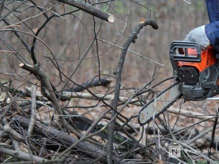Тоншаевский лесоруб попал под статью за 14 берез