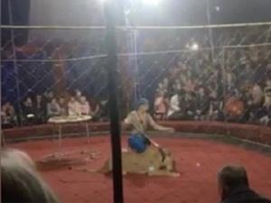 Раненная цирковой львицей девочка впала в кому
