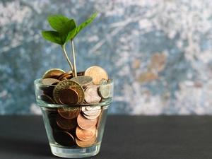 Почему на самом деле денежное дерево так называют