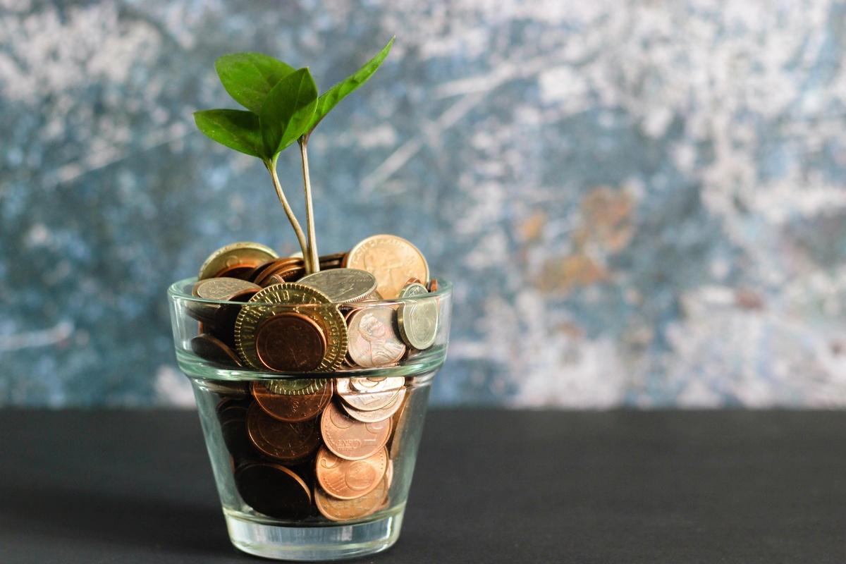 Почему на самом деле денежное дерево так называют - фото 1