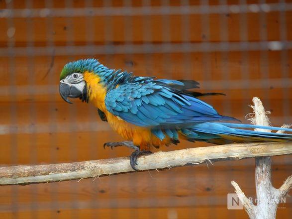 Выжить в пандемию: что происходило в закрытом зоопарке «Лимпопо» - фото 35