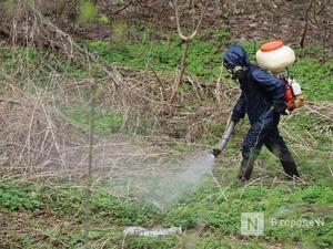 11 территорий обработают от клещей в Советском районе