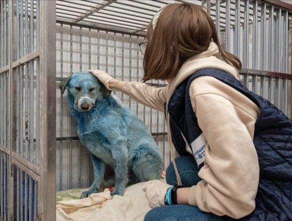 Семерых синих собак из Дзержинска доставили в госпиталь - фото 3