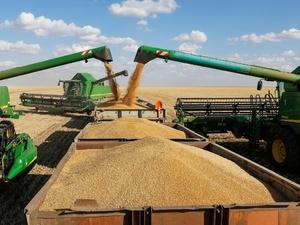 Полтора миллиона тонн зерна собрали нижегородские аграрии