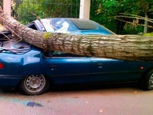 Женщина и ребенок пострадали при столкновении иномарки с деревом в Тонкинском районе