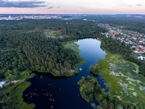 Сосновые леса под Дзержинском взяли под охрану спустя 13 лет
