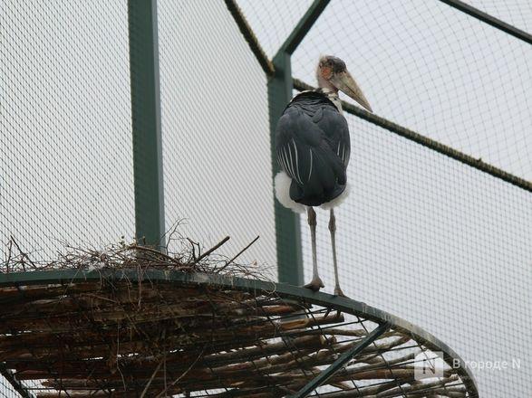 Уникальный вольер для марабу построили в нижегородском зоопарке - фото 16