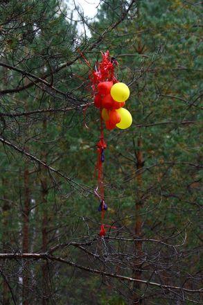 Нижегородцев просят не запускать в небо шары ради Керженского заповедника - фото 2